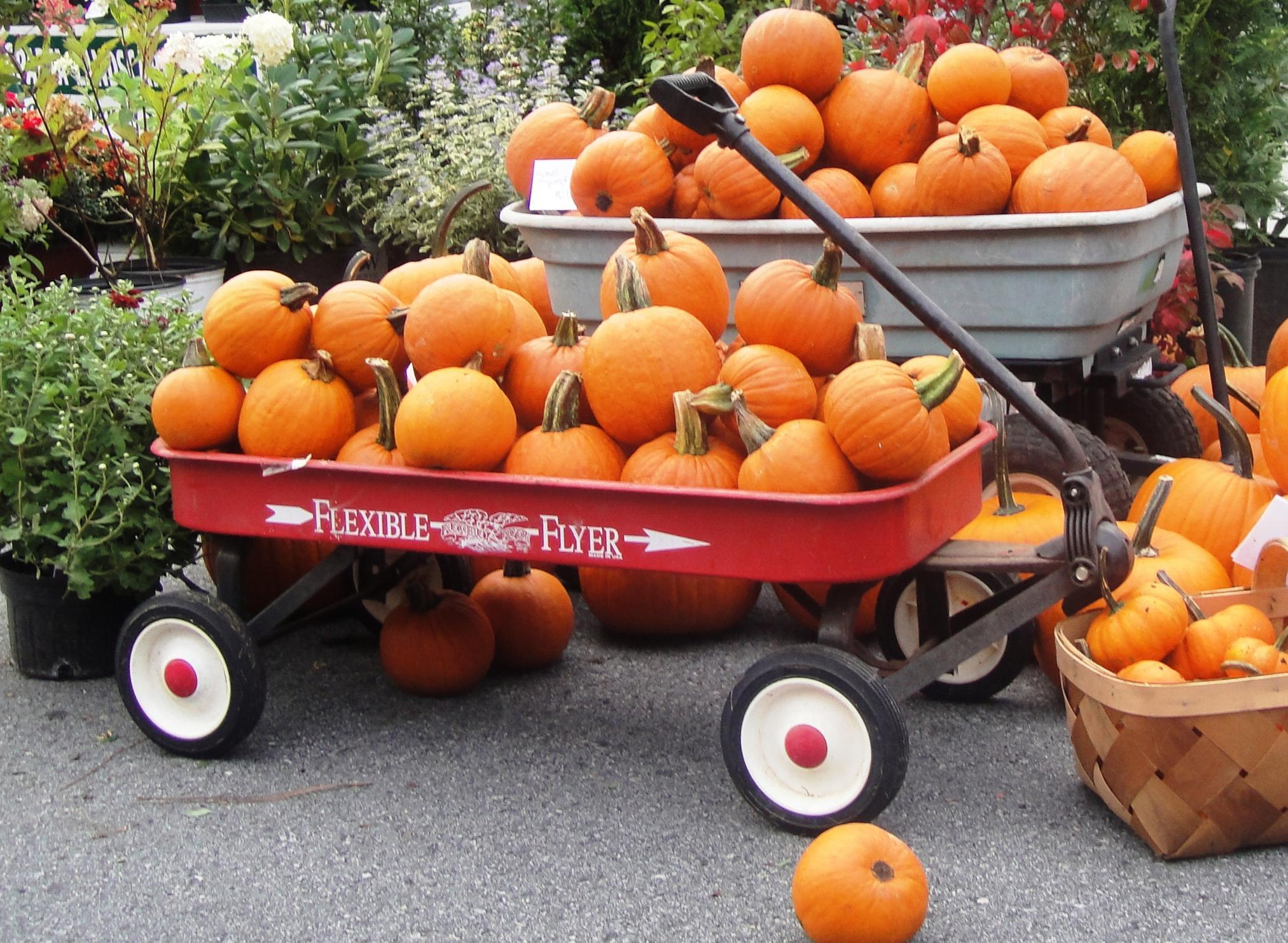 yadkin valley pumpkin festival, elkin